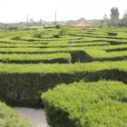 The maze at Cyherbia Botanical Park.