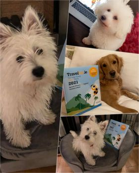 Travelbiz continues to roll out our all new 2021 desktop diaries and our followers include some adorable canine fluffy readers