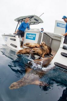 Seaworld records over 35,000 marine rescues
