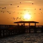 Sunrise at Safety Harbor Pier is for the birds